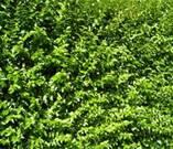 hiddeninthegreen